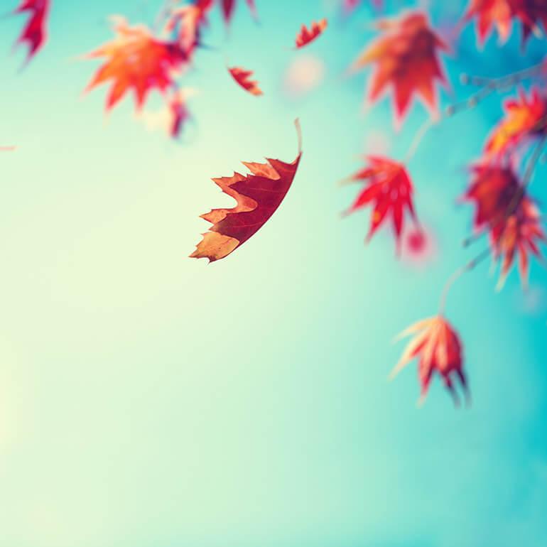 fallende Herbstblätter